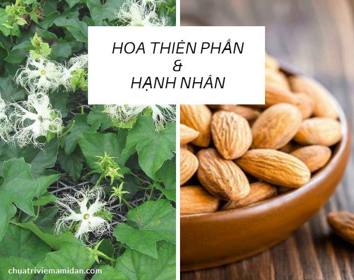 Trị viêm Amidan bằng thiên hoa phấn kết hợp với hạnh nhân