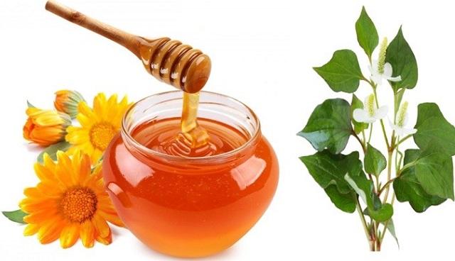 Trị viêm amidan bằng rau diếp cá và mật ong