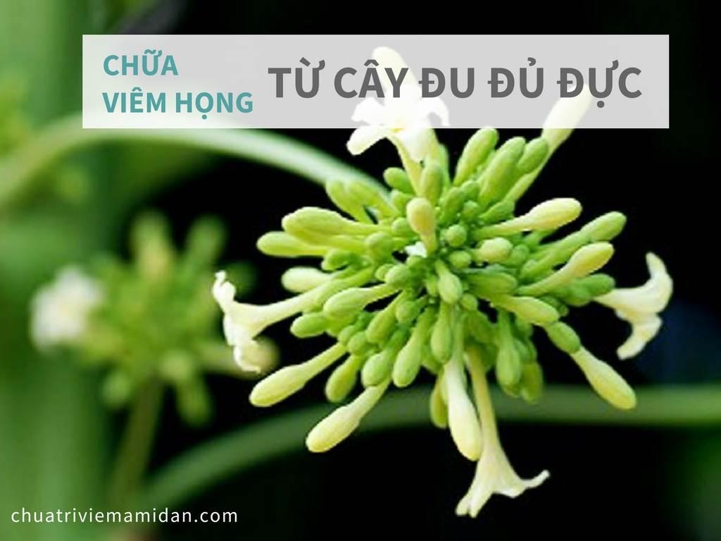 công dụng chữa bệnh của hoa đu đủ đực