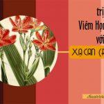 cây xạ can chữa viêm họng hạt